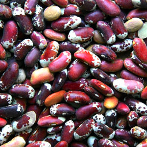 appaloosa beans